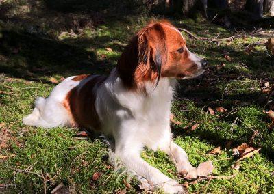 Ayliena genießt den frischen Waldboden